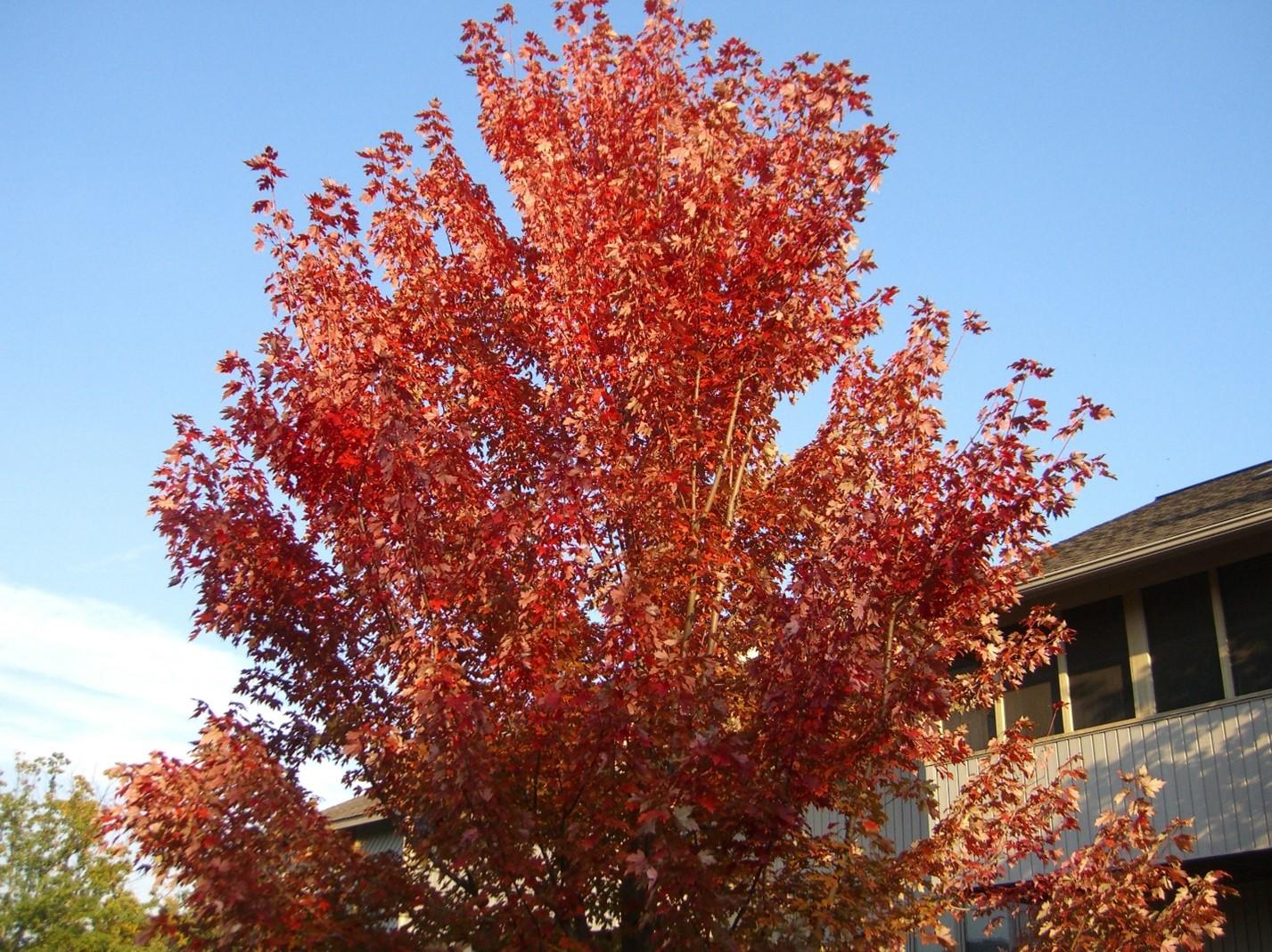 fall yard and home maintenance