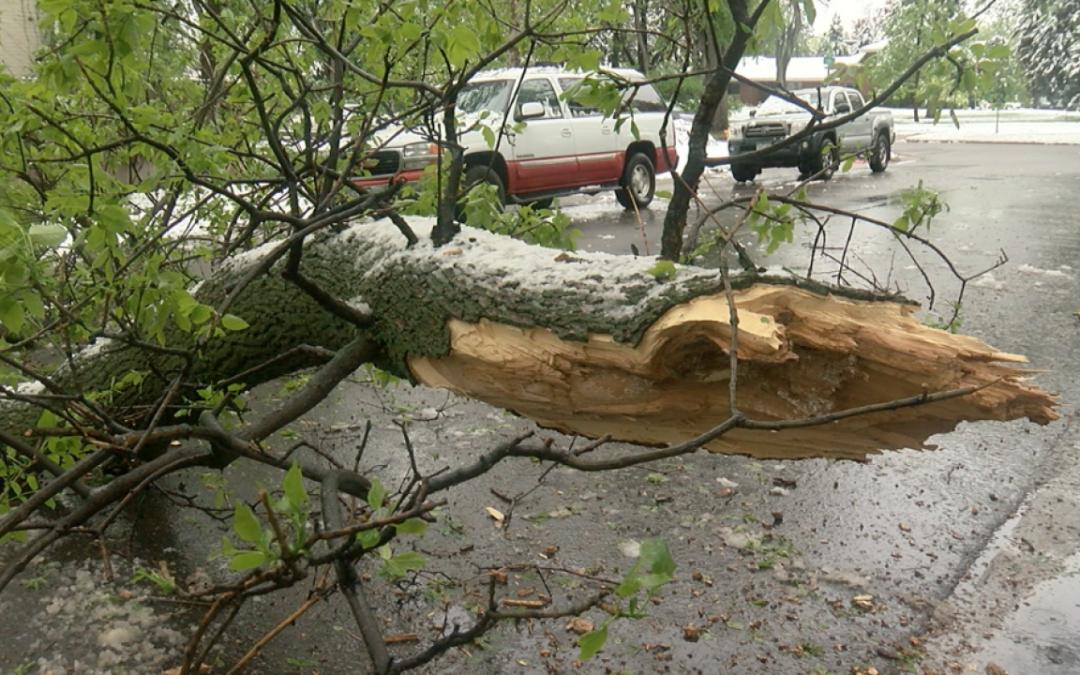 Iced tree branch down across street